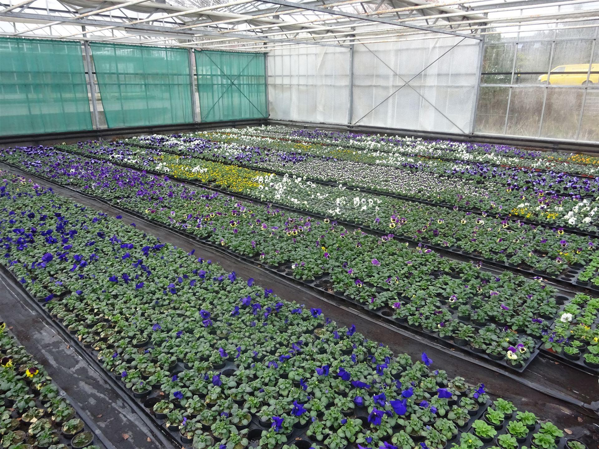 Topfpflanzen Verschenken blumenblock rostock